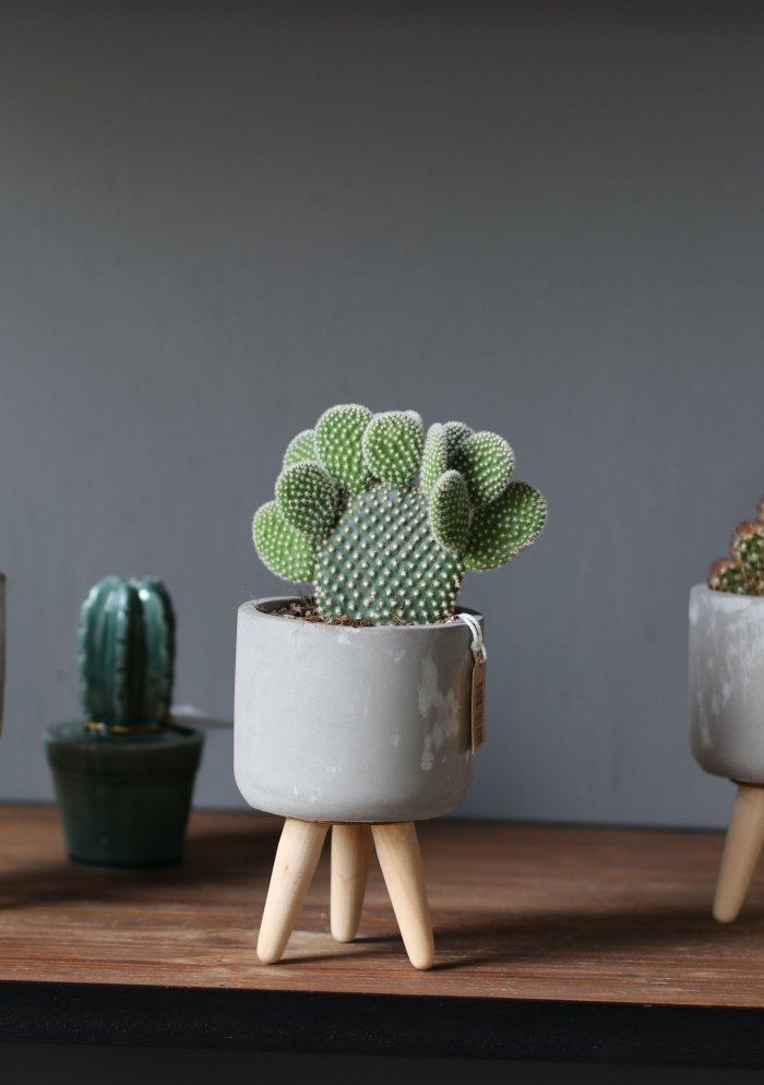 Кактусы в керамике в размере S