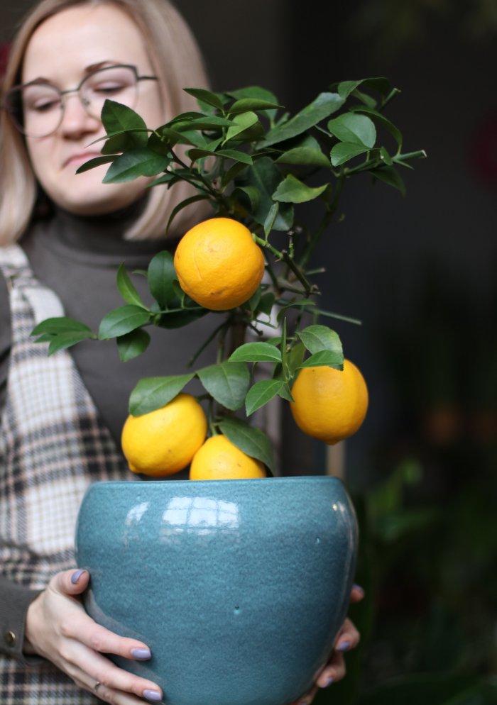 Цитрус Лимон