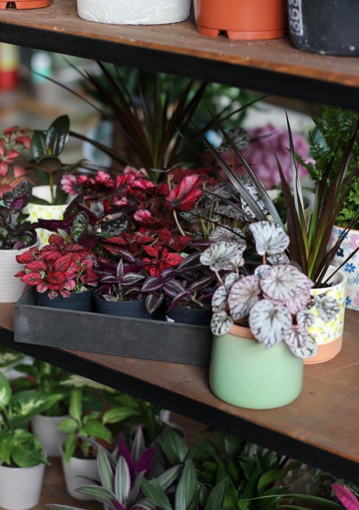 Микс комнатных растений